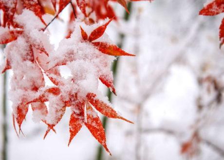 Bunte Pflanzen Im Winter: Die 10 Schönsten Arten Für Ihren Garten