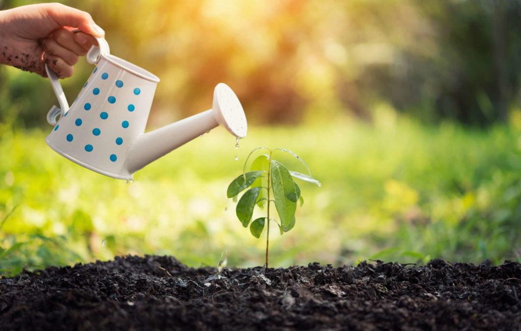 Gießkanne gießt frischei ngepflanztte Pflanze im Freien