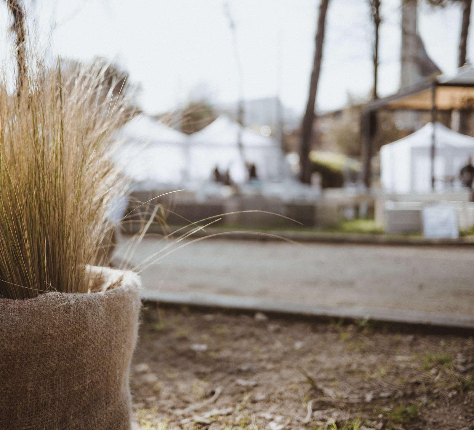 pampasgras einpflanzen im topf pflanzen experten tipps plantura. Black Bedroom Furniture Sets. Home Design Ideas
