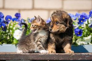 Hund Und Katze Sitzen Vor Blumen Im Garten