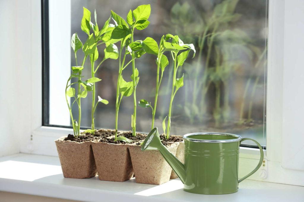 Pflanzen wachsen auf Fensterbank neben Gießkanne