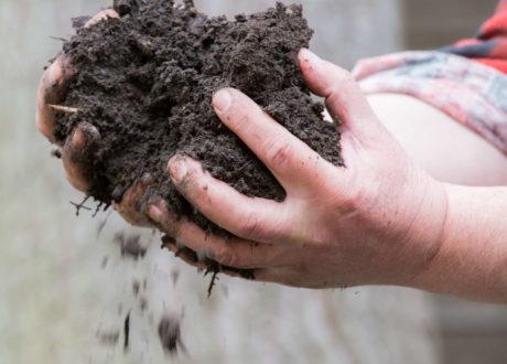 Humuswirtschaft Im Eigenen Garten