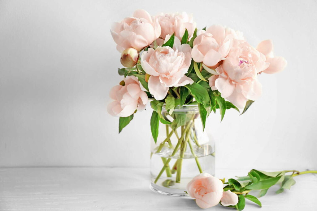 Pfingstrosen in einer Vase am Tisch