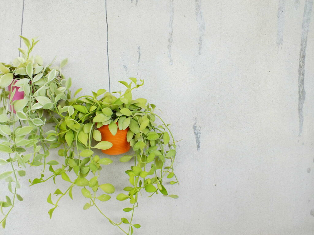 Hängende Pflanzen in Zimmer