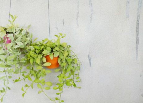 Gr nes leben archives seite 5 von 19 plantura - Schattenpflanzen zimmer ...