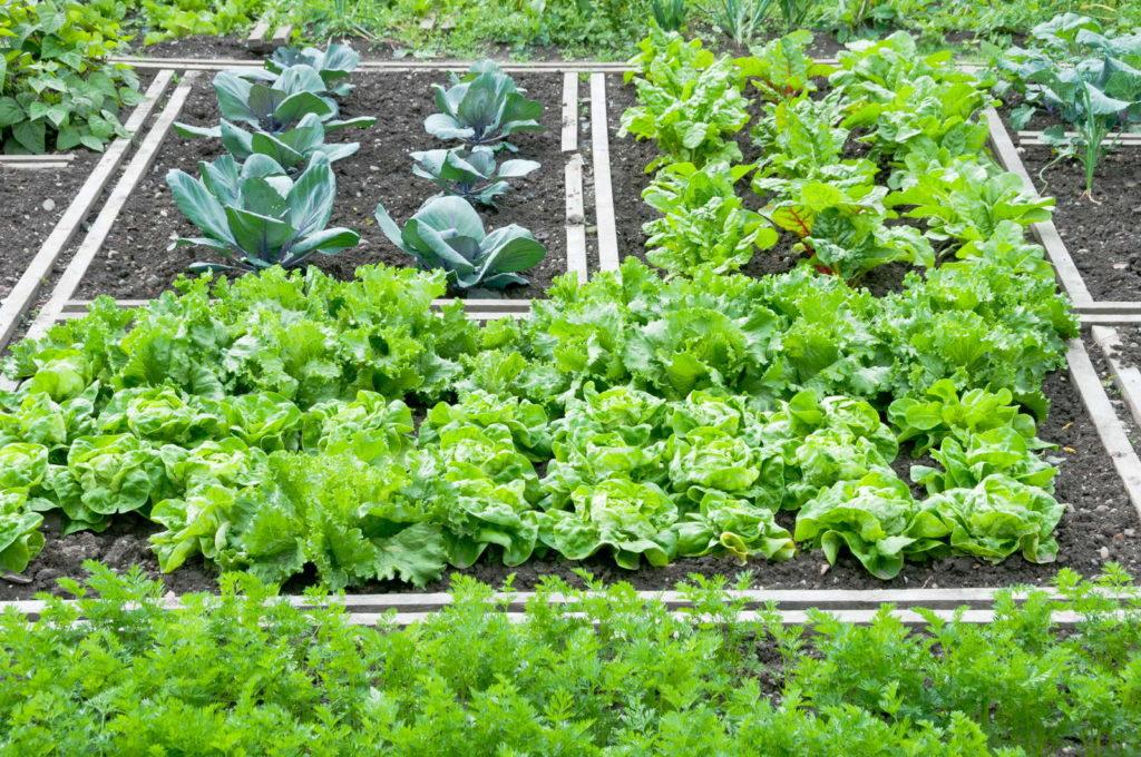 Anbauplan im Garten für Gemüse