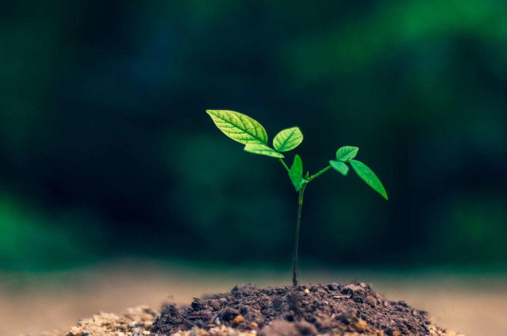 Pflanze wächst in Garten