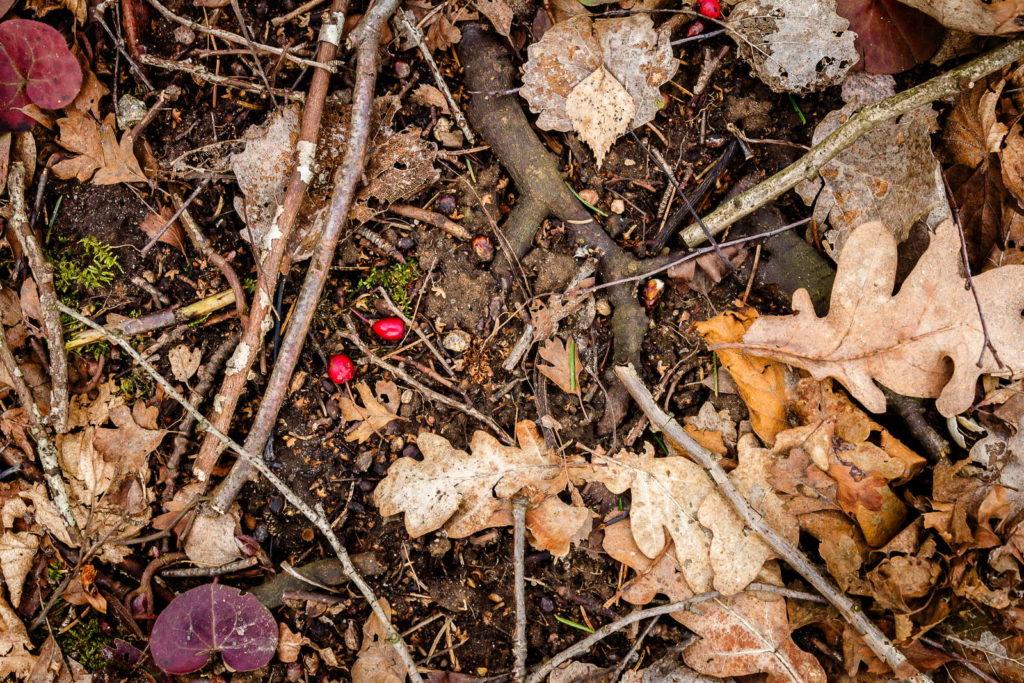 Waldboden mit Blätter und Zweigen