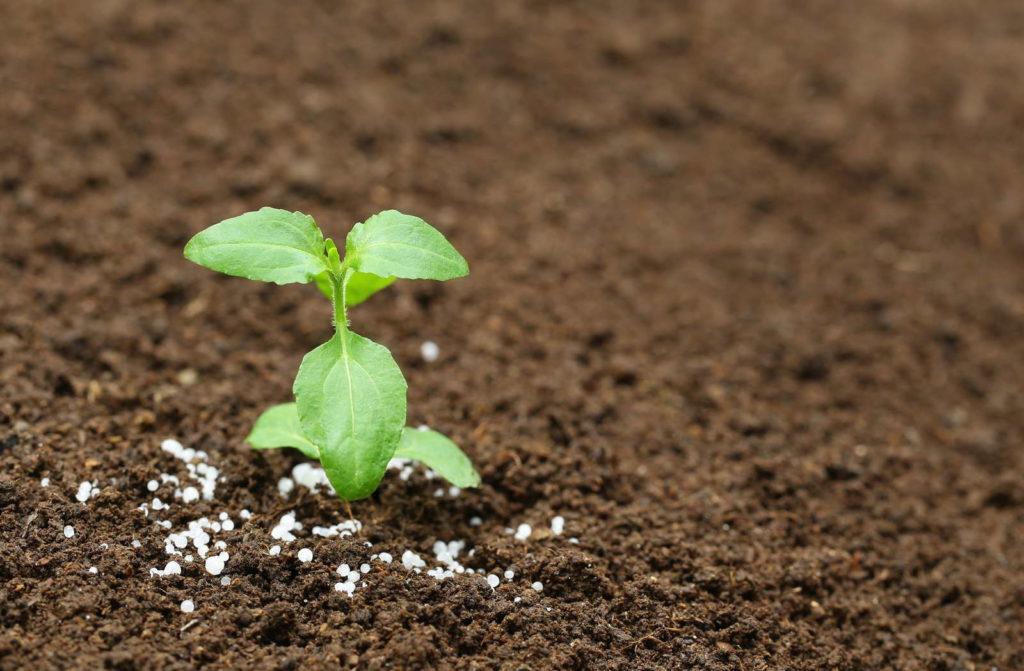 Setzling in Erde eingepflanzt