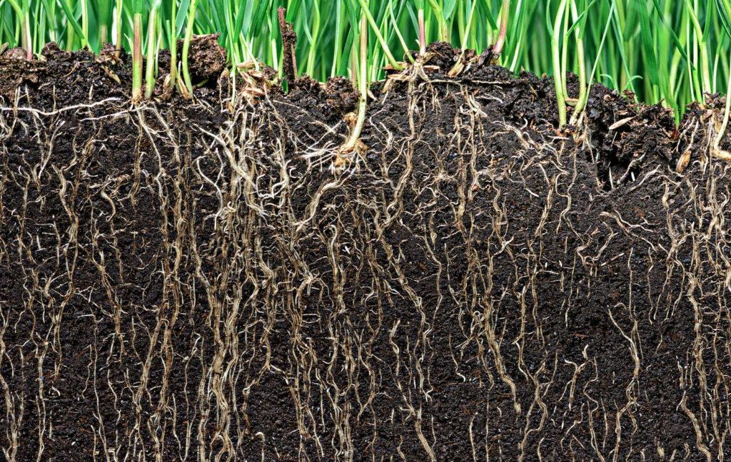 Humusreicher Boden mit Wurzeln