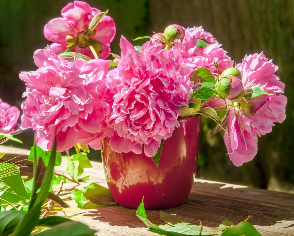 Pfingstrosen in einer Vase auf Tisch