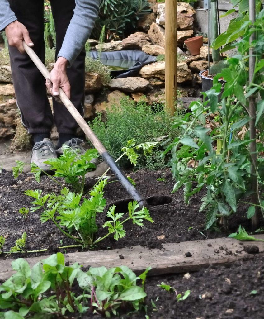 Humuswirtschaft: Boden eines beets wird bearbeitet