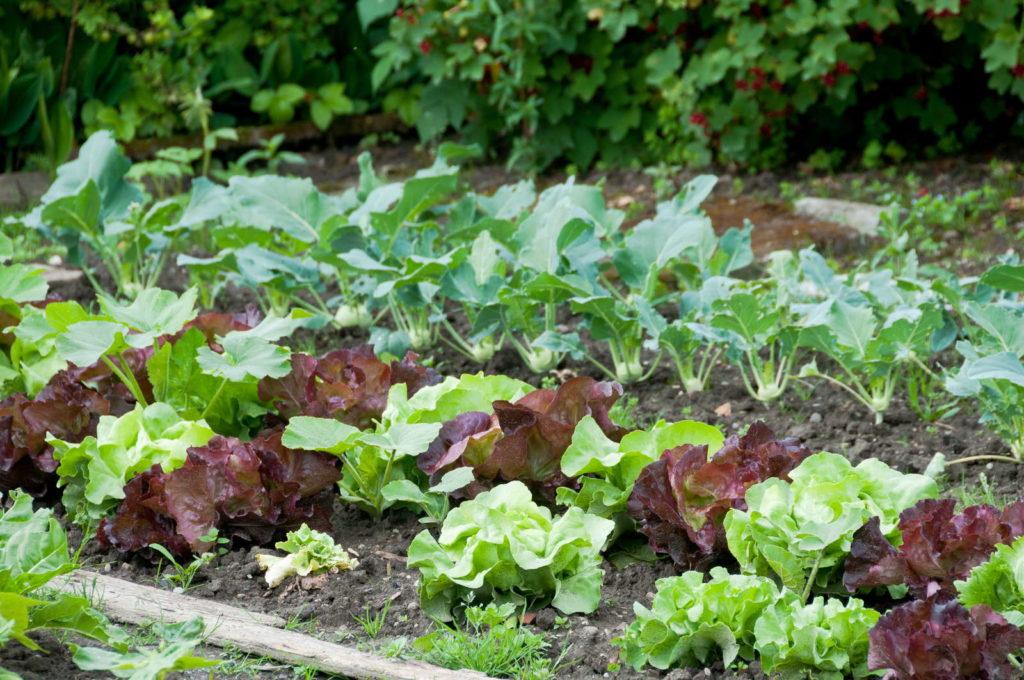 Standort Gemüseanbau