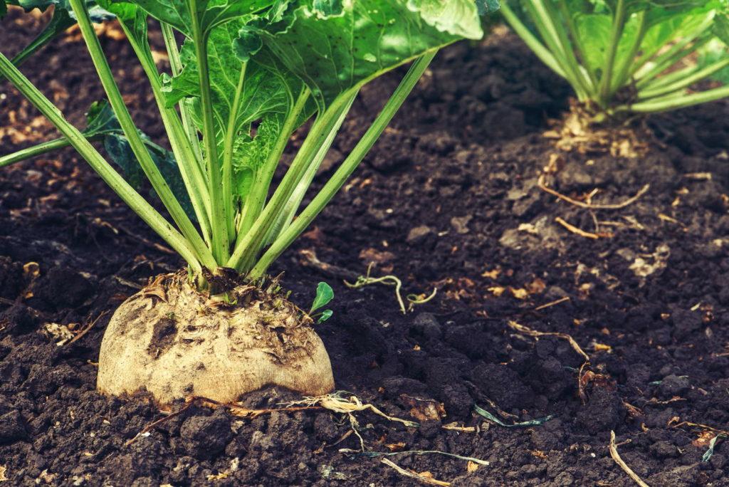 Boden als Nahrungsgrundlage von Pflanzen