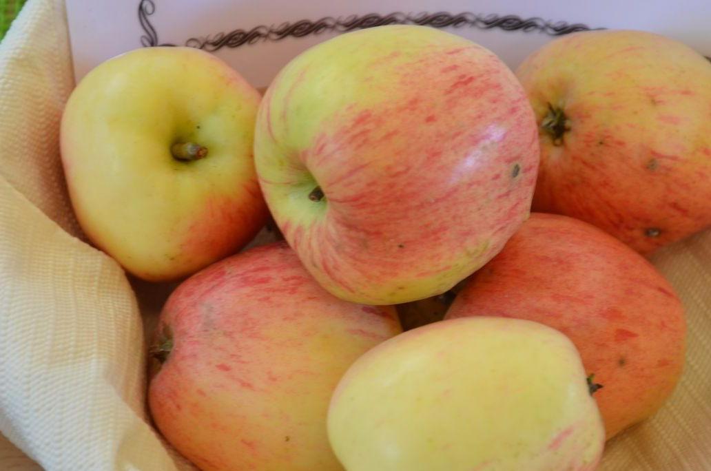 Prächtig Alte & altbewährte Apfelsorten: Die 30 besten im Überblick - Plantura &RV_52