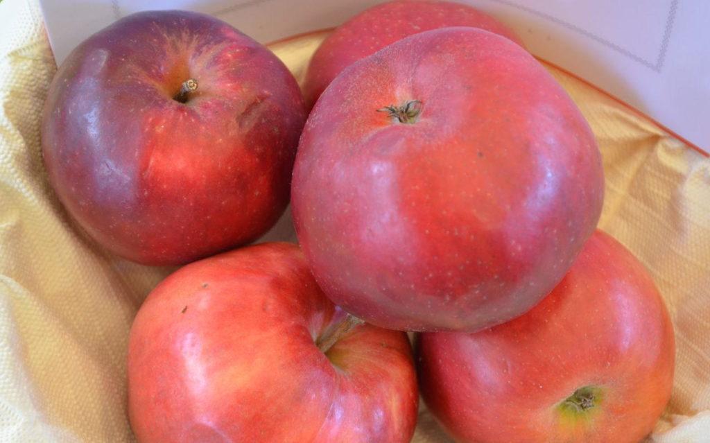 Danzinger Kantäpfel in einer Schale
