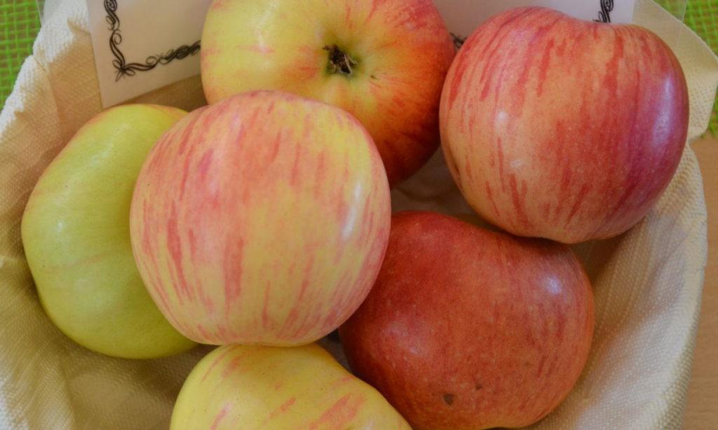 Geflammter Kardinal Äpfel in einer Schale