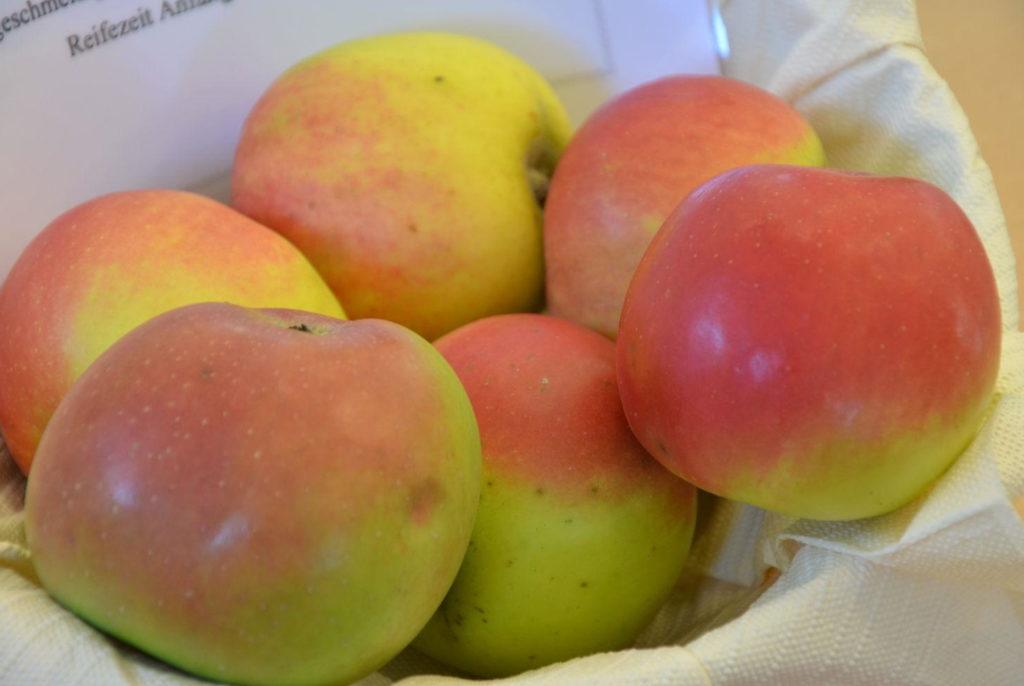 Äpfel Welschisner in einer Schale