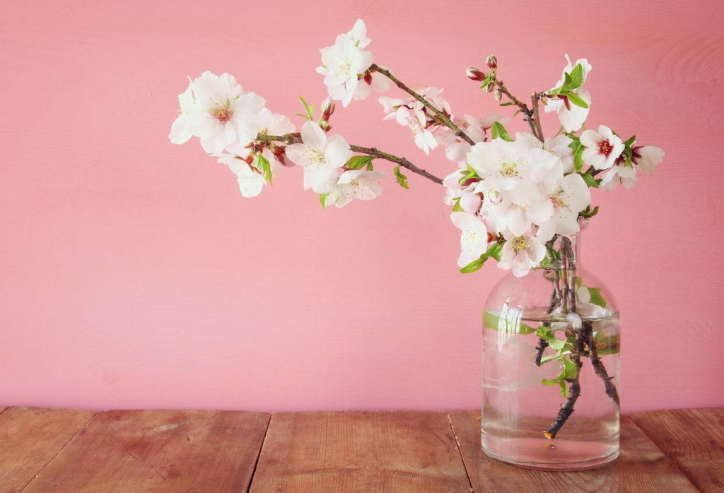Barbarazweig Kirschblüten