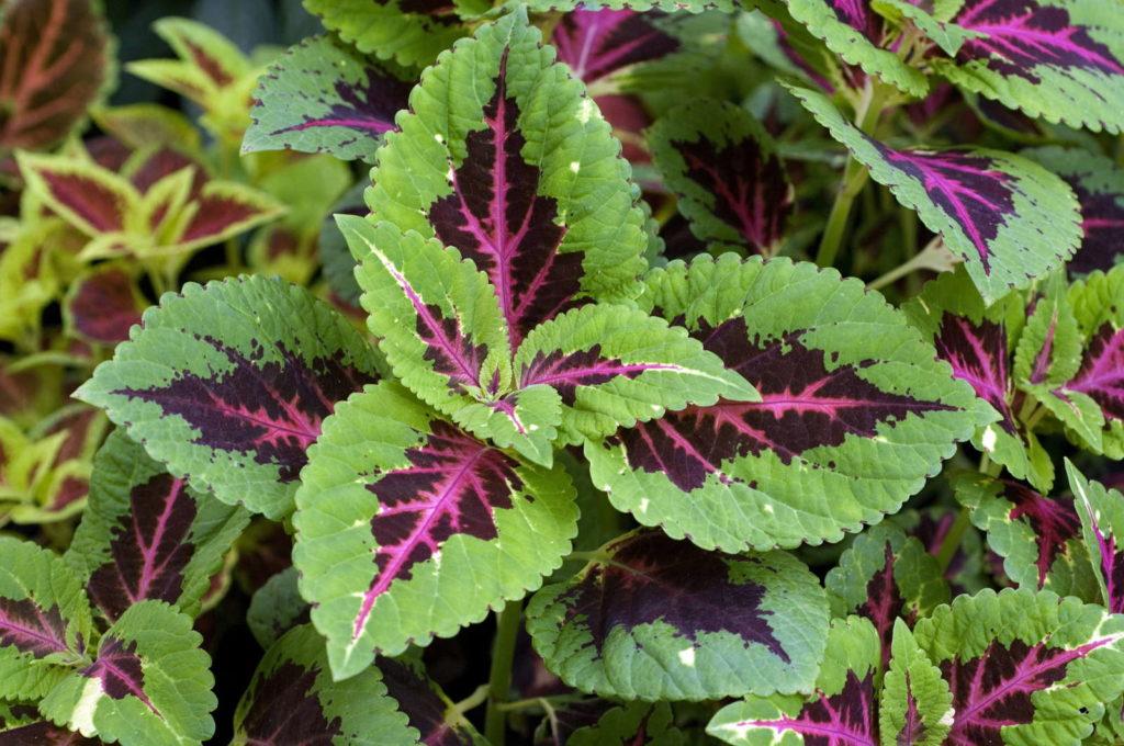 Pflanzen Schatten