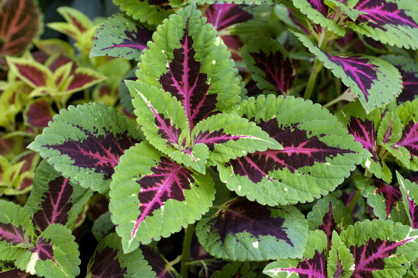 Schattenpflanzen 16 Pflanzen Fur Den Schatten In Ihrem