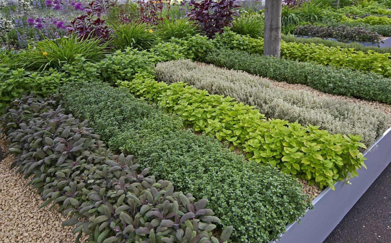 kräuter pflanzen: anleitungen & tipps für fensterbrett, balkon