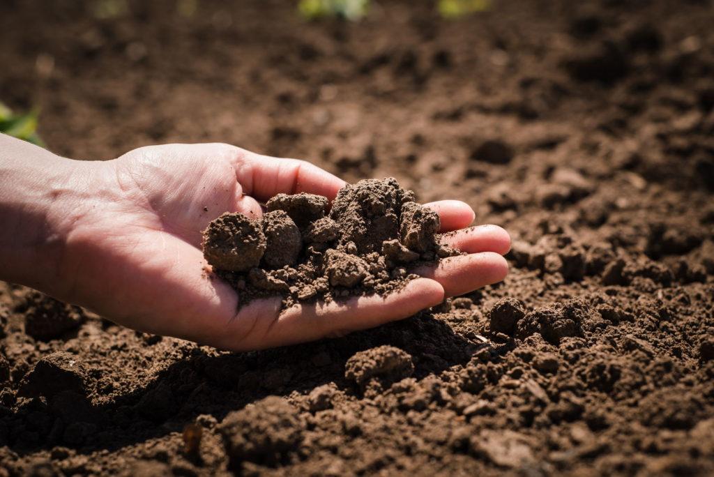 Hand mit Erde im Garten