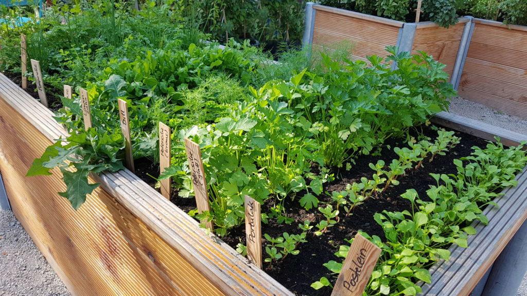 kr uter pflanzen anleitungen tipps f r fensterbrett balkon beet plantura. Black Bedroom Furniture Sets. Home Design Ideas