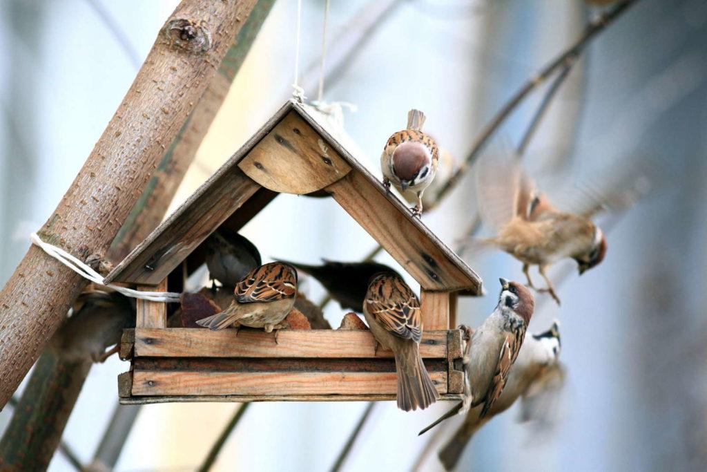Holzhaus mit Vögeln im Garten