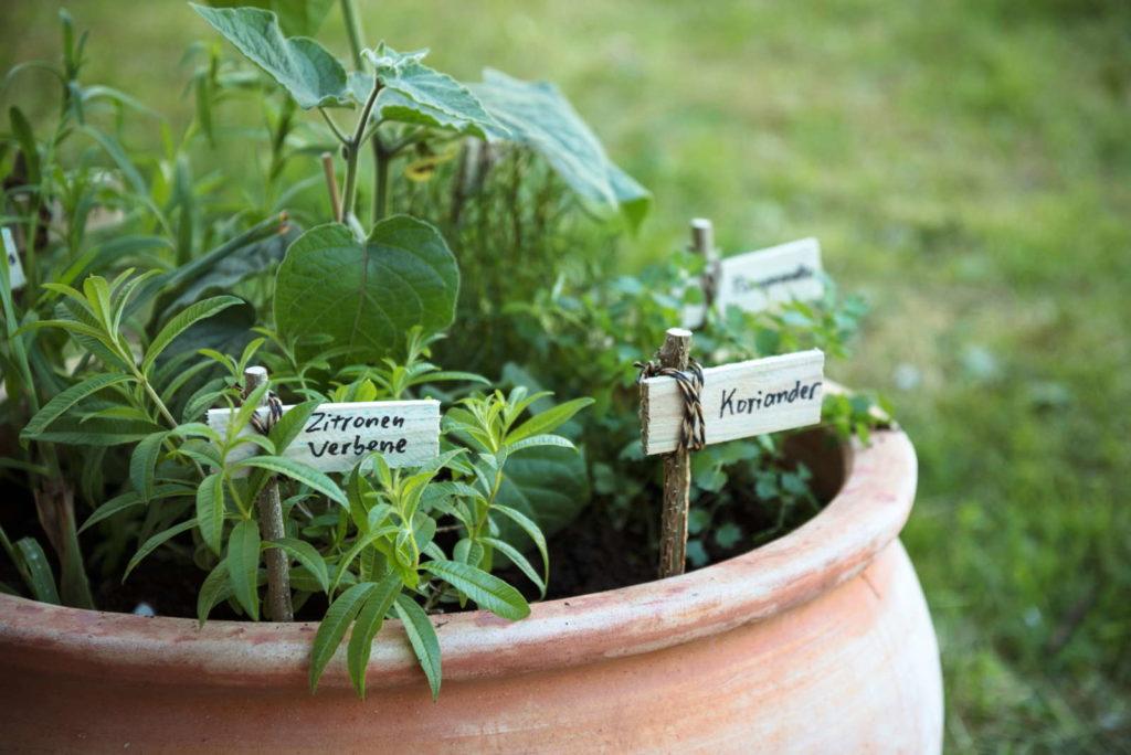 verschiedene Kräuter im Topf im Garten