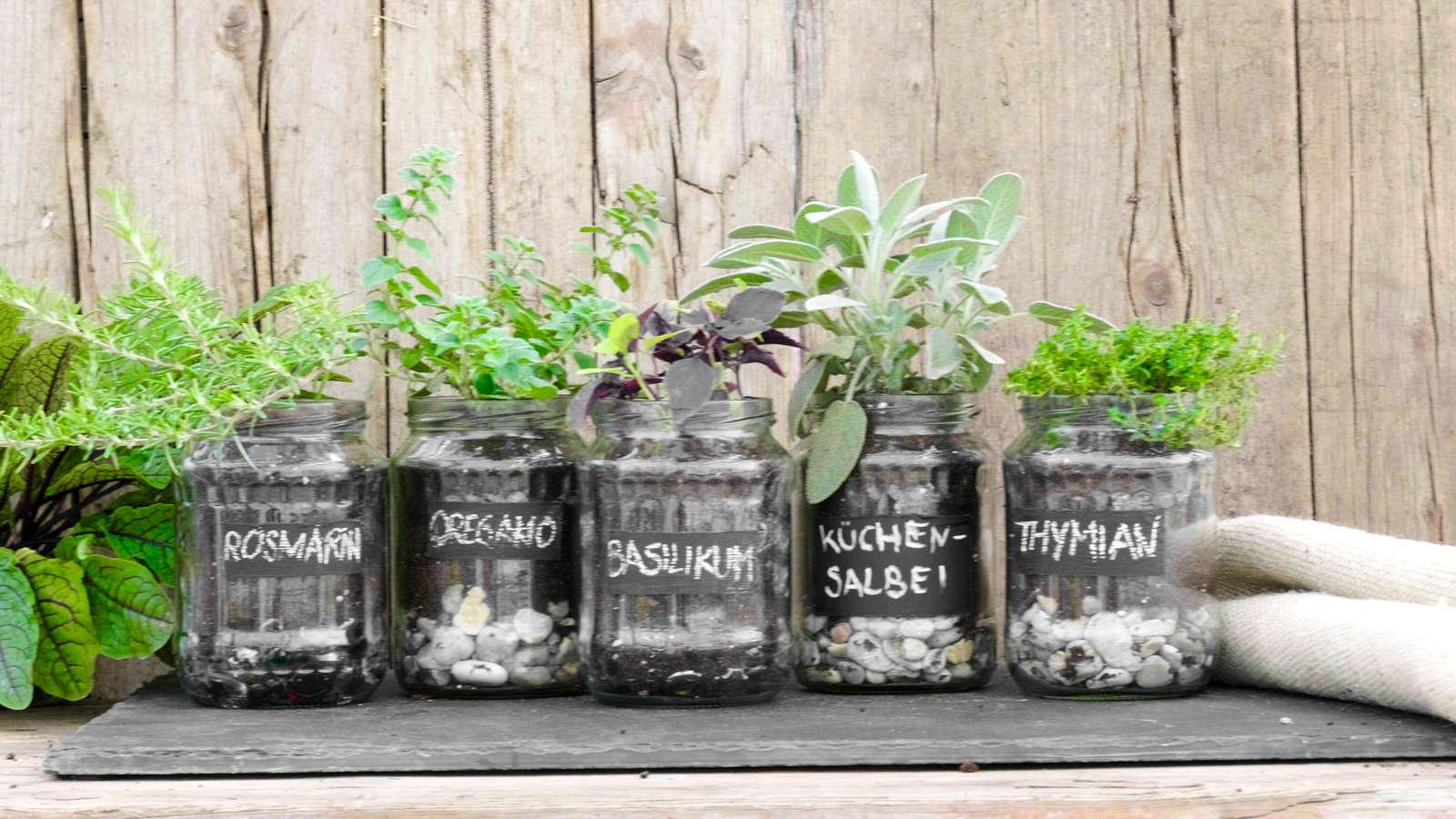 Kräuter im Glas pflanzen: Video-Anleitung & Tipps - Plantura