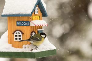 Meise Mit Holzhaus Zur Winterzeit Im Garten