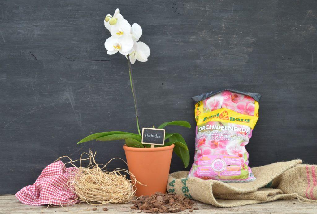 Orchidee mit Erdsack