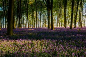 Schattenpflanzen Im Wald