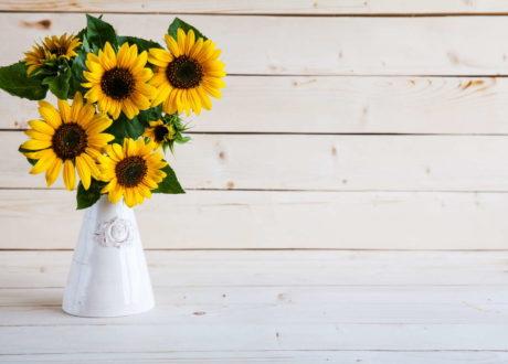 Sonnenblumen In Der Vase: Abschneiden & In Heißes Wasser Stellen