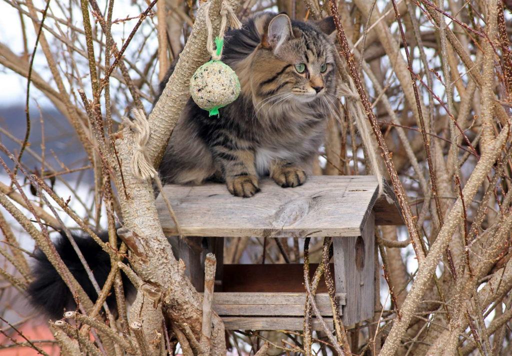 Vogelhaus mit Katze im Baum