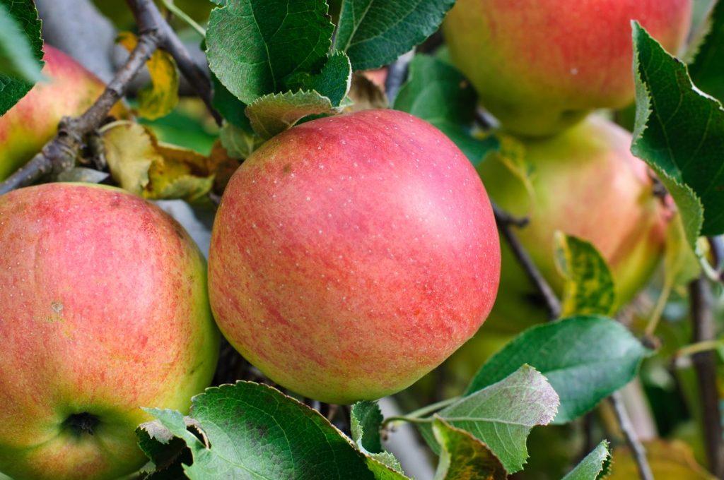 Baldwin-Apfel