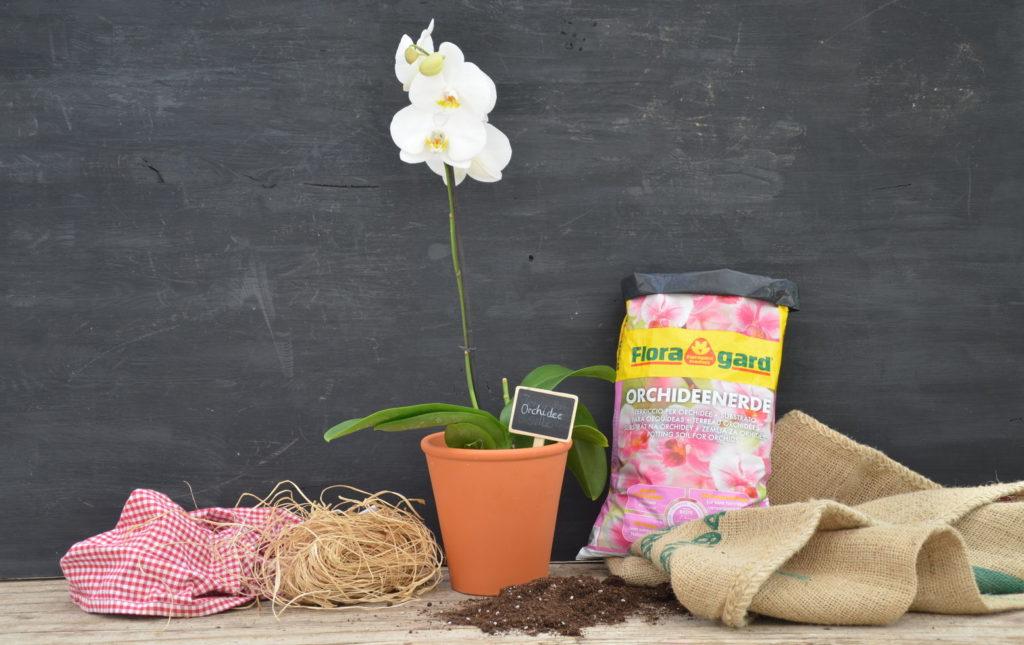 Orchidee blühend mit Orchideenerde