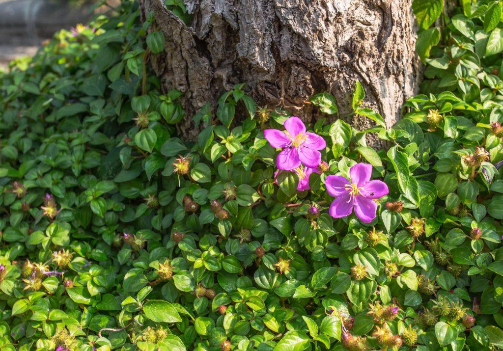 Schattenpflanze unter Baum