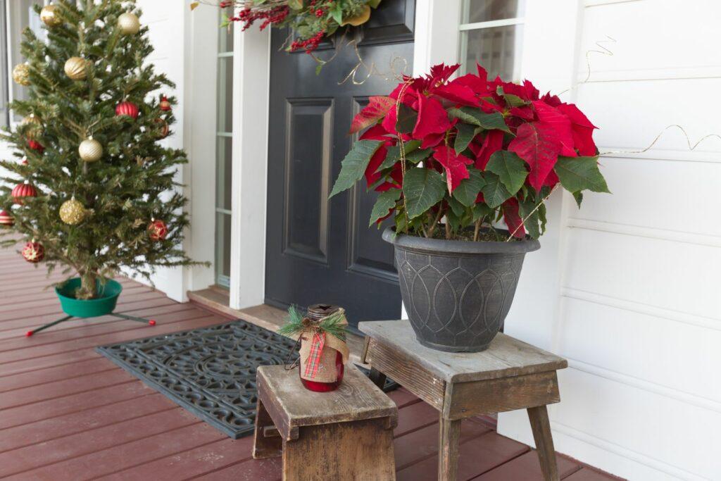 Weihnachtspflanzen als Dekoration