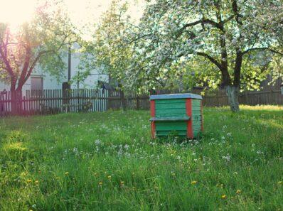 Warum Bienen im Garten sinnvoll sind
