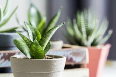 Schattenliebende Zimmerpflanzen: Unsere Top 10
