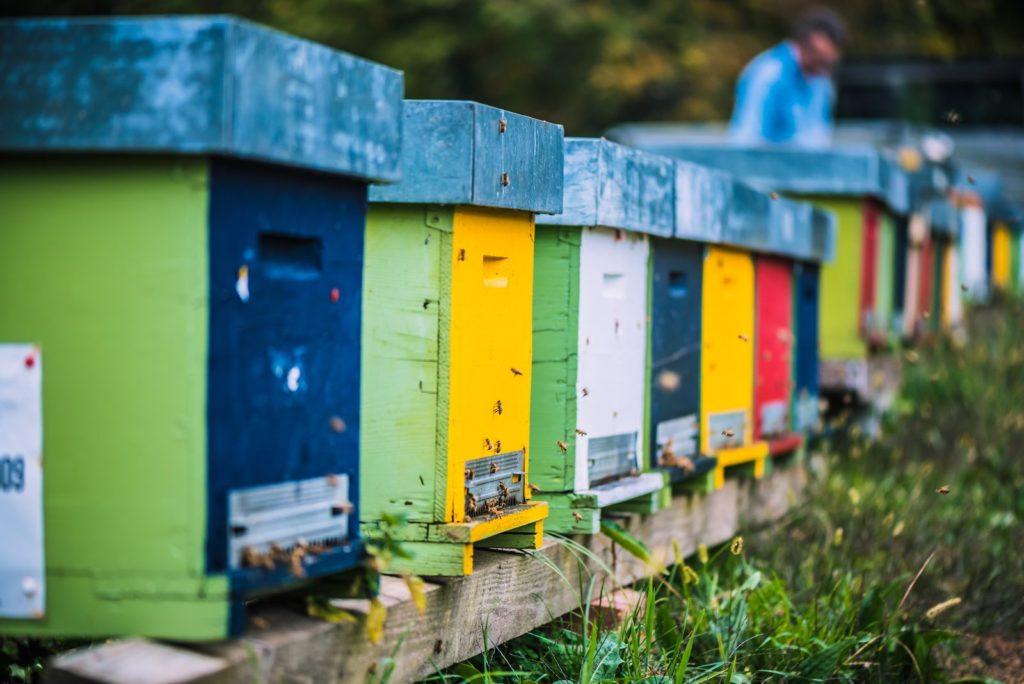 Bunte Bienenstöcke sind nebeneinander in einer Wieseaufgestellt