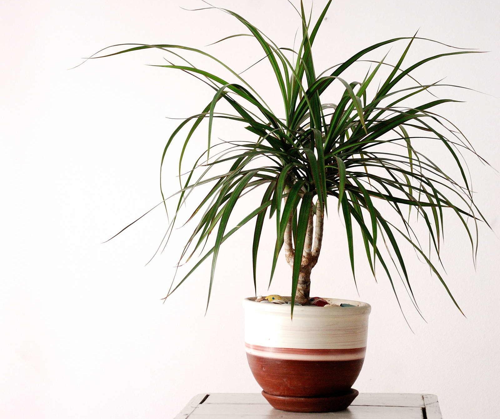 Schattenliebende Zimmerpflanzen: Unsere Top 10 - Plantura