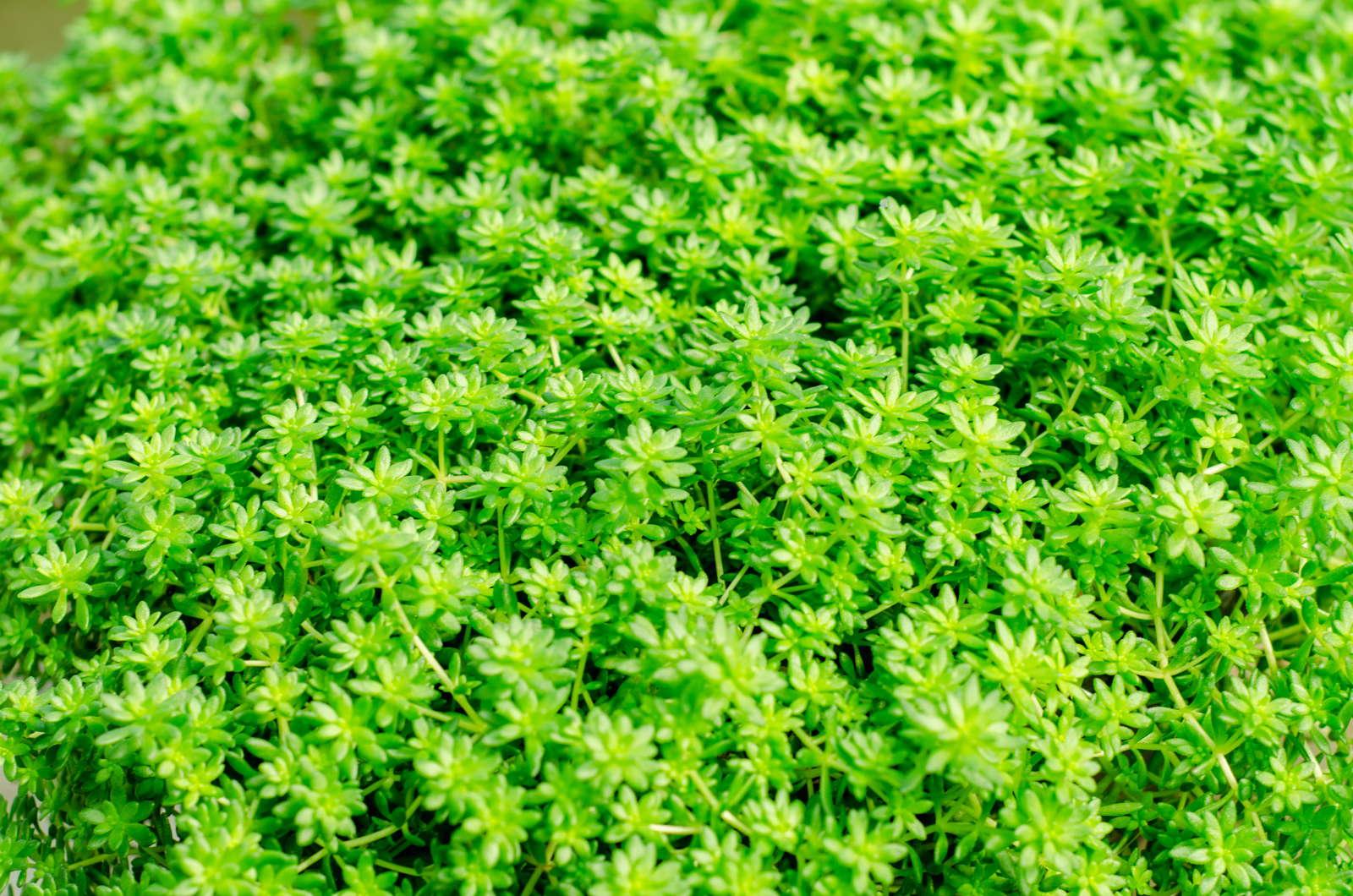 Bodendecker Die 20 Schönsten Für Eine Einfache Gartengestaltung