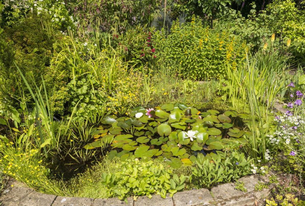 Gartenteich im Sommer mit vielen Pflanzen