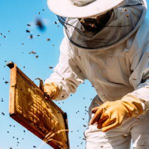 Ein Imker Hält Bienenwaben In Der Hand. Um Ihn Herum Fliegen Bienen