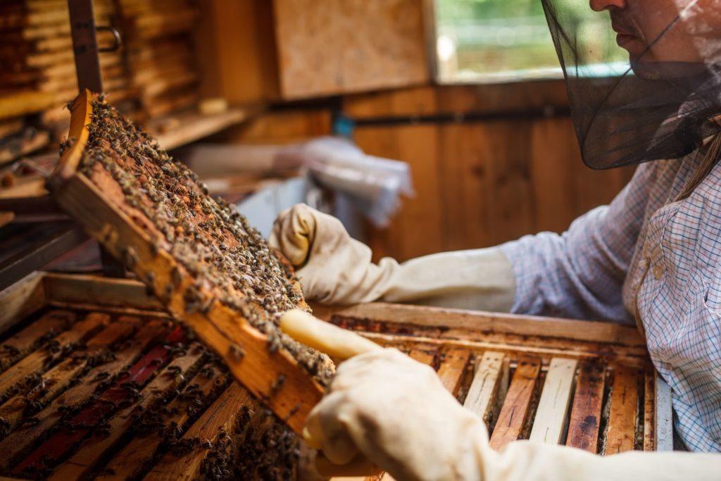Imker fährt mit dem Finger über Honigwaben