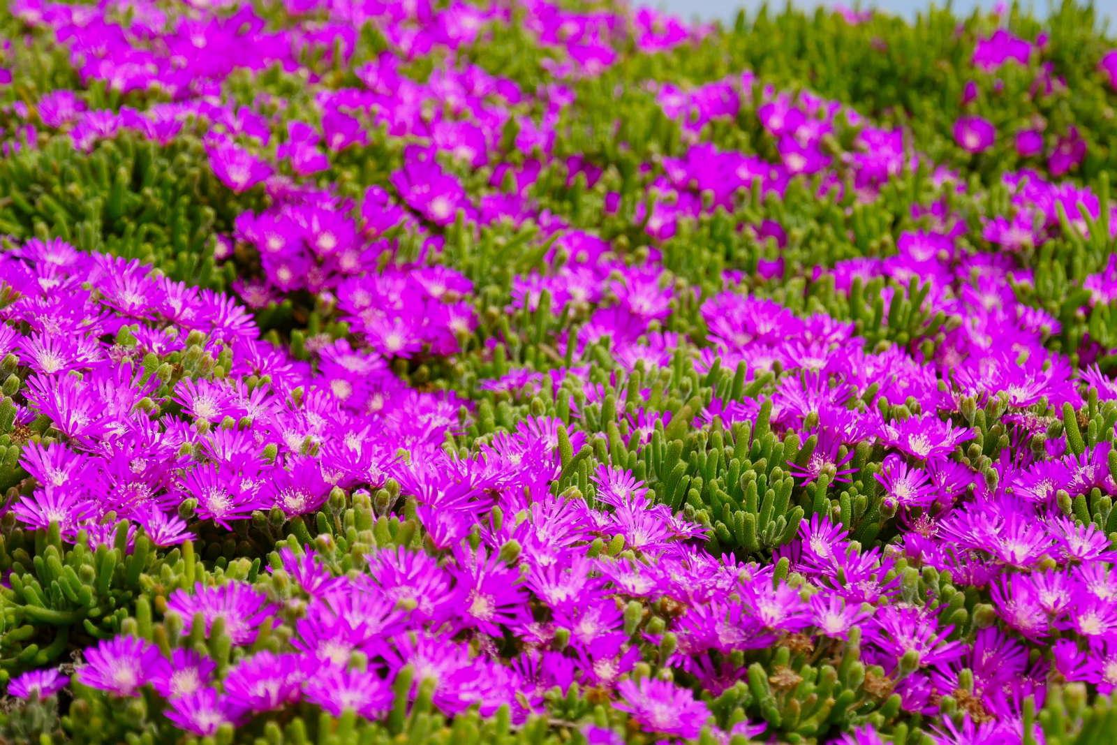 Bodendecker Die 20 Schonsten Fur Eine Einfache Gartengestaltung