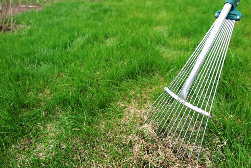 Rasenpflege Auskämmen des Rasens